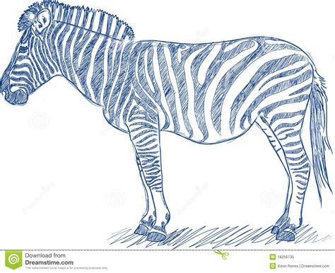 Vector Pen Sketch Of A Zebra Royalty Free Stock Photo