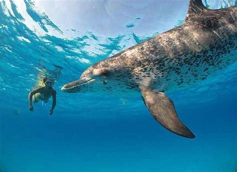 bimini scuba diving conditions  forecast october