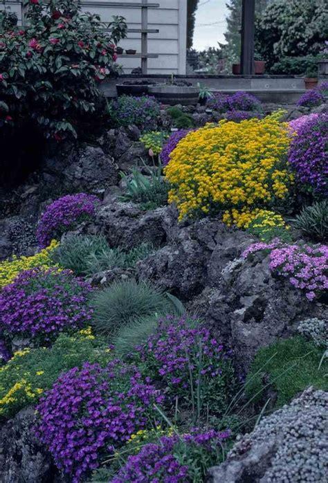 pflanzen für trockenmauer naturstein trockenmauer bepflanzen geignete pflanzen f 252 r