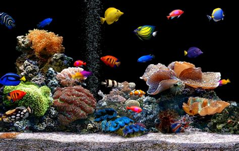 Animated Tropical Wallpaper - tropical fish tank wallpapers wallpapers gallery