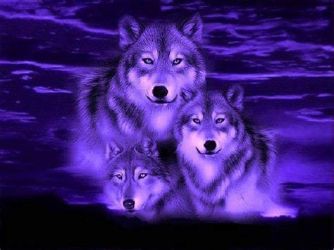 Blue And Purple Wolf Wallpaper by Wolf Pics Blue Wolf Wallpaper Best Hd