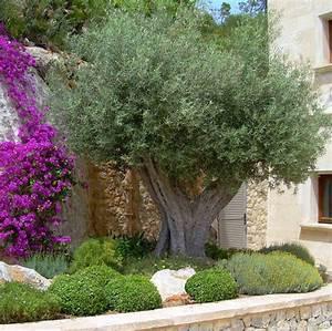 Mediterrane Gärten Bilder : der mediterrane garten einfach vielf ltig ~ Orissabook.com Haus und Dekorationen