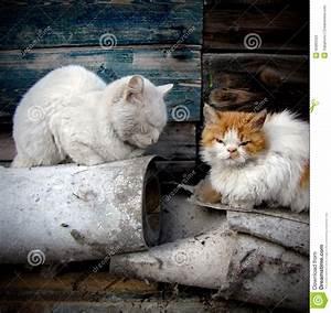 Homeless Cats Stock Photo - Image: 45865523