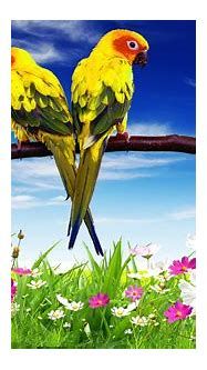 Parrots Pair Hd Desktop Background For Mobile Phone And ...