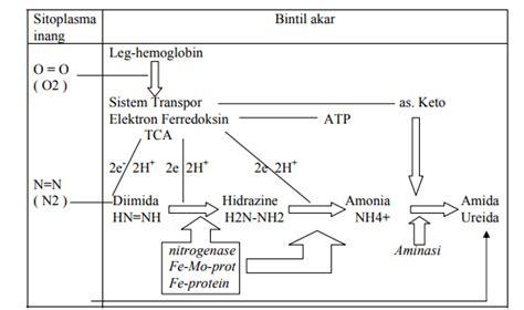 apakah  dimaksud  siklus nitrogen   tanah