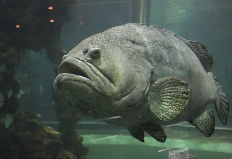 fish grouper puffer types wordtracker seo strategies experts effective yes link building most