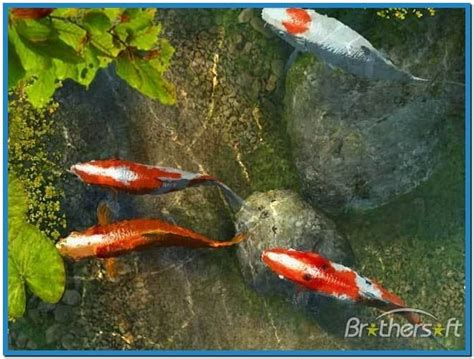 Animated Koi Fish Wallpaper - koi fish animated wallpaper
