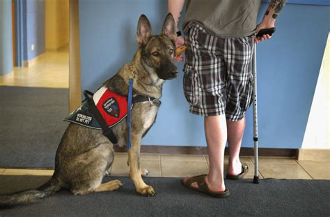 scam service dog industry thrives  lack  federal