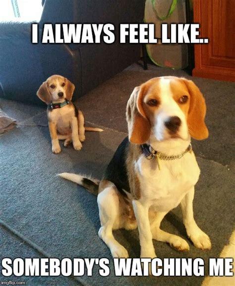 Beagle Memes - beagle imgflip