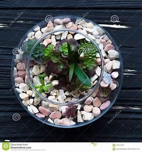 Minigarten Im Glas : mini garden in glass vase stock photo image of bottle 104774750 ~ Eleganceandgraceweddings.com Haus und Dekorationen