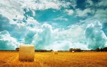 Field Baltana Wallpapers