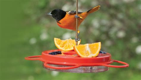 birds unlimited hummingbird feeder nectar feeders birds unlimited birds unlimited