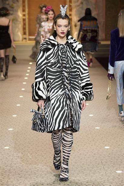 Dolce Gabbana Fall Animal Wear Trend Ready