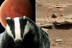 Alien 'proof': UFO hunters life on Mars with 'space badger ...