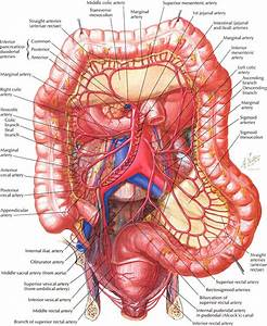 Function Of Large Intestine In Human Body