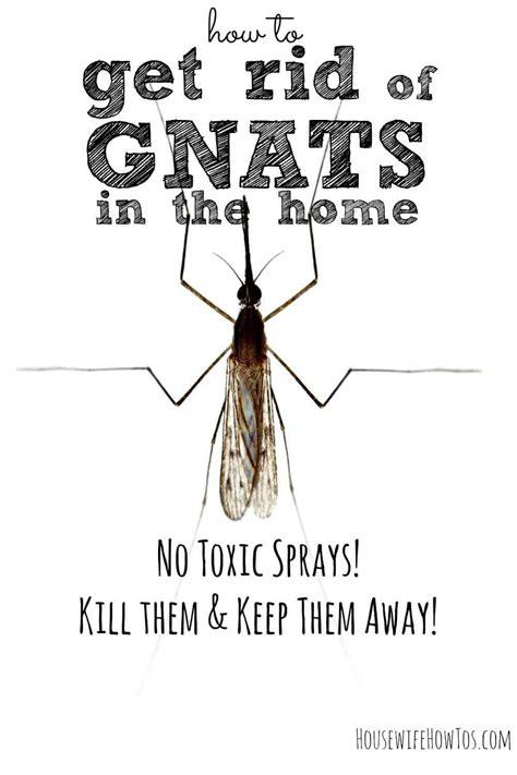 rid  gnats  homes