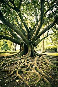 royalty, free, plant, roots, pictures, , images, and, stock, photos