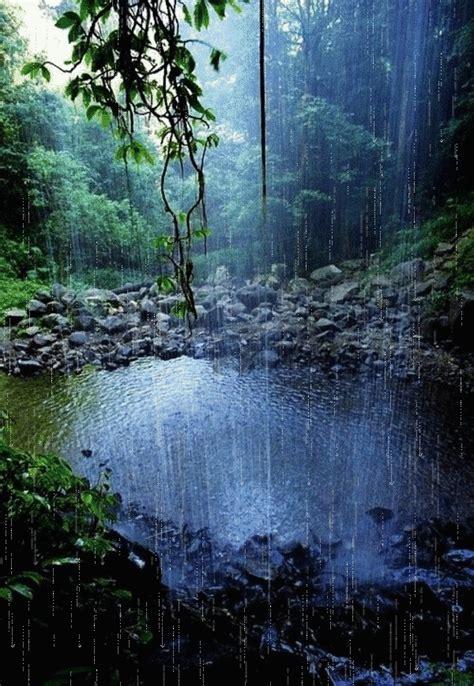 beautiful forest scene  rain falling   water