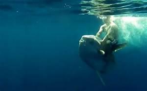 Angler makes like a cowboy and rides giant Mola mola