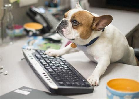 animali in ufficio cerchi lavoro in queste 4 societ 224 puoi portarti il