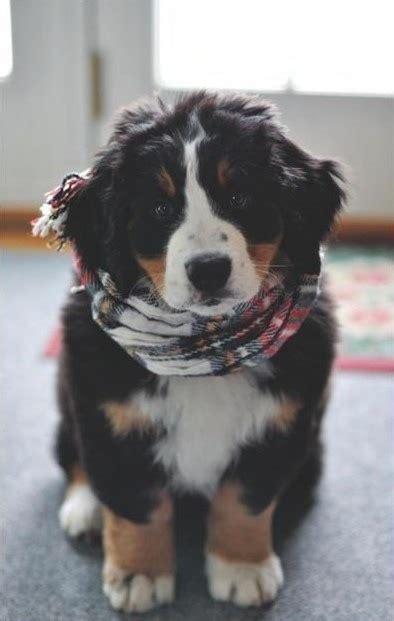 hipster dog  tumblr