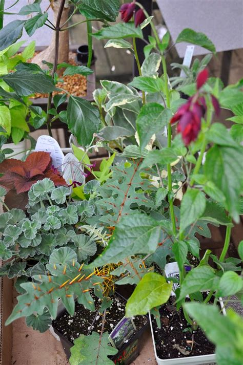 growing with plants this garden is not special you