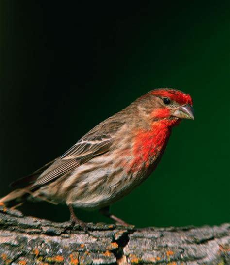 pin by darlene granberg on birds pinterest