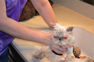 How to avoid cat flea bites | The Purrfect Cat Groomer
