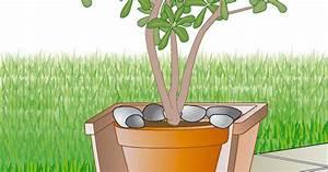 Große übertöpfe Für Zimmerpflanzen : k belpflanzen vor wind sch tzen mein sch ner garten ~ Bigdaddyawards.com Haus und Dekorationen