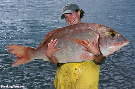 Bid Fish Big Fish Catch Pictures Freaking News