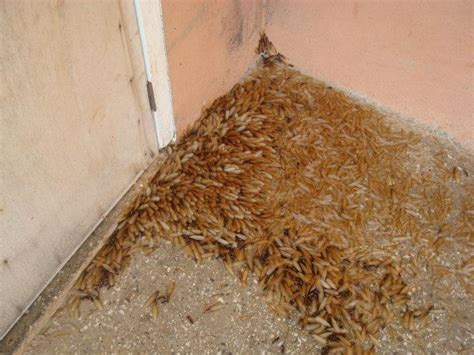 what to look for in a home termites invaded the house sarah s experiences in ghana