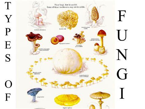 Fungi Fungus (one) There's A Fungus Among Us Fungi (more