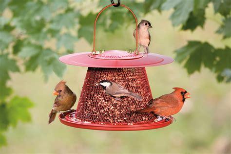 cardinal bird feeder cardinal no no feeder
