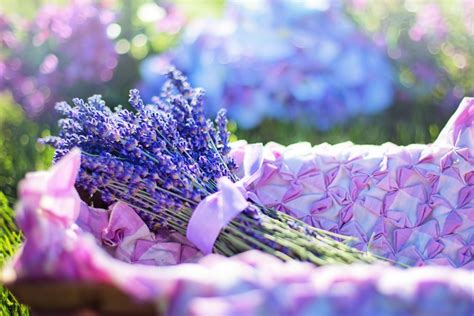 Gambar : biru warna lembayung muda ungu lavender
