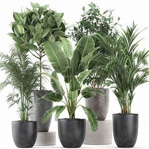Decorative, Plants, For, The, Interior, In, Flowerpots, 610, 3d