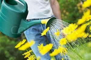Gelbe Sommerblumen Mehrjährig : gelbe sommerblumen mit eine gr ne gie kanne gie en stock foto colourbox ~ Frokenaadalensverden.com Haus und Dekorationen