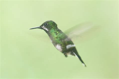 heat l for hummingbirds green and white hummingbird