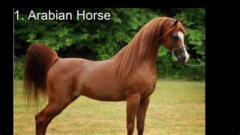 Top 10 Most Expensive Horse In The World Youtube