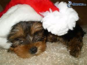 Dogs with Santa Claus Hats