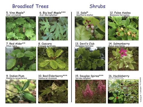 name of shrub landscape designers in ri shrubs names gardening humor decorative landscaping rocks