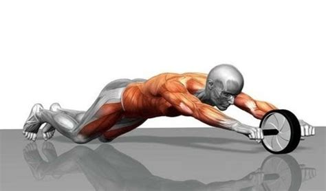 ab wheel rollout exercise guide wizard bodybuilding