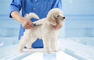 dog grooming 101 be ing professional pet groomer
