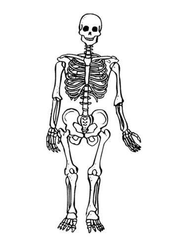 Kleurplaat Skelet Mens by Kleurplaat Skelet Lesidee Ziek Zijn