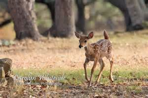 Texas Hill Country Wild Animals