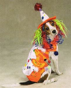 Halloween Creativeoween Costumes For Dogs Women Boys Diy ...