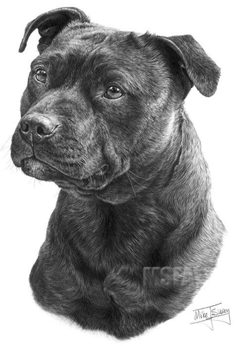 staffordshire bull terrier fine art dog print  mike sibley