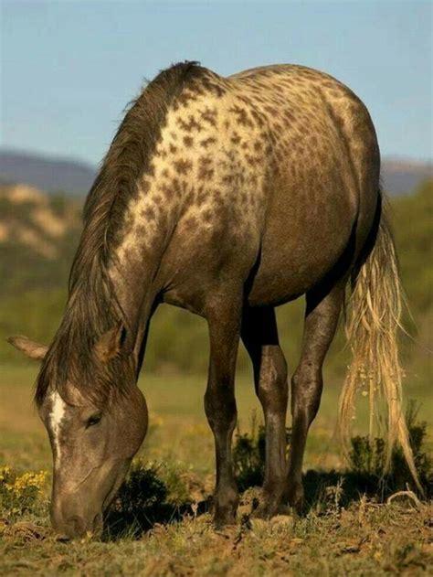 horses horse rare wild mundo mustangs markings majestic animals animal