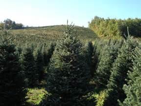 christmas tree farms 171 cbs new york