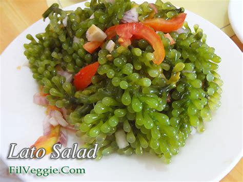 Lato Salad (Seaweed Salad)   Kawaling Pinoy Tasty Recipes