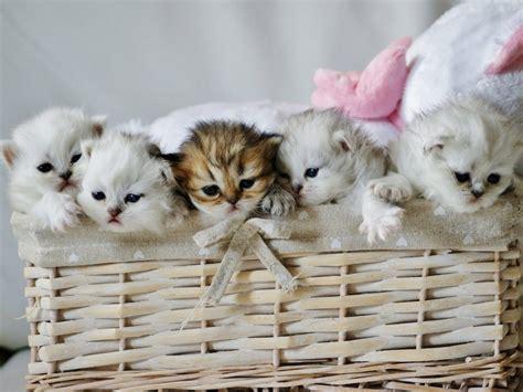 but cuisines fond écran trop mignons des bébés chatons chezmaya